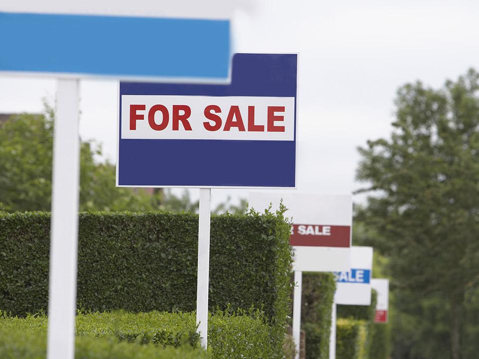 فروش یک قطعه زمین در سرعین
